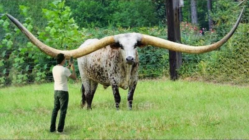 Удивительные рекорды животного мира. топ-10
