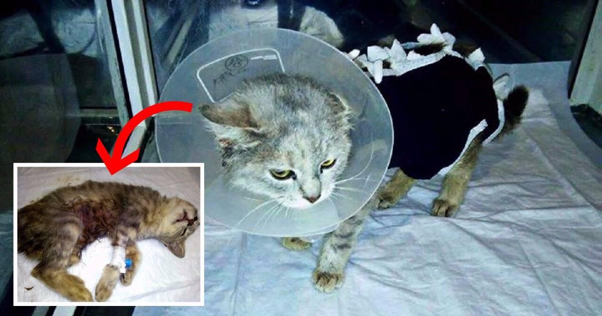 Усыпление животных на дому без боли в санкт-петербурге