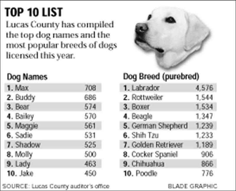 Как назвать кокер-спаниеля: список красивых имен для собак мальчиков и девочек.