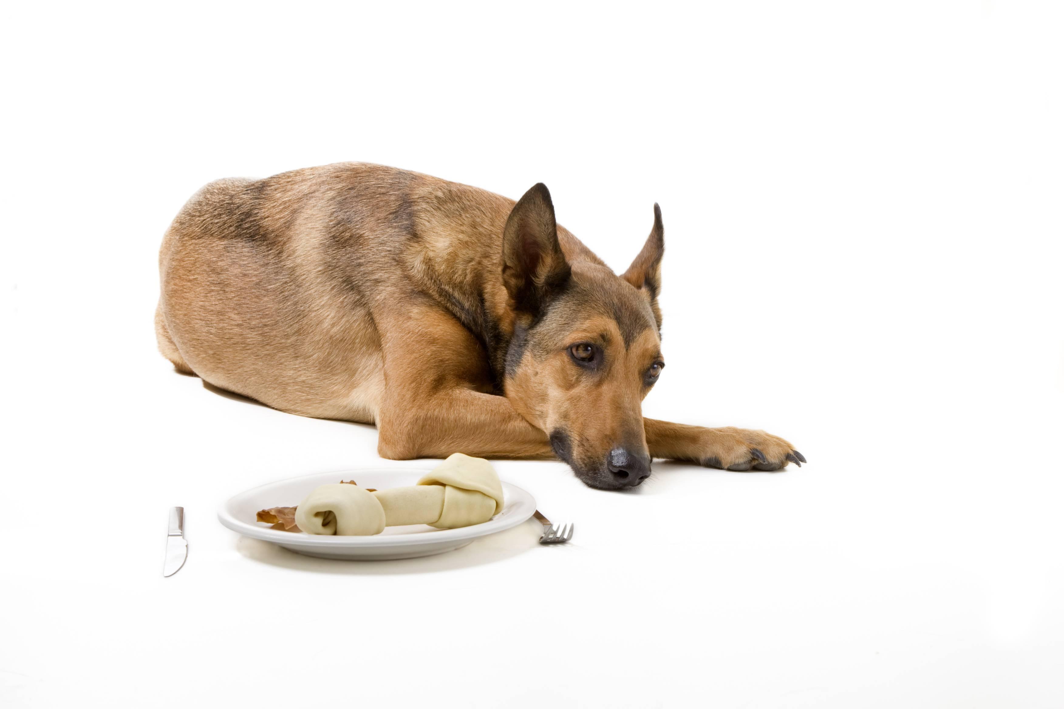 Почему собака не ест: причины отсутствия аппетита, лечение – преданное сердце