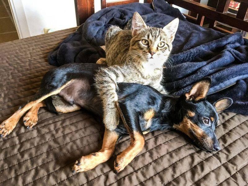 Кошка с собакой в квартире: знакомство и правила содержания