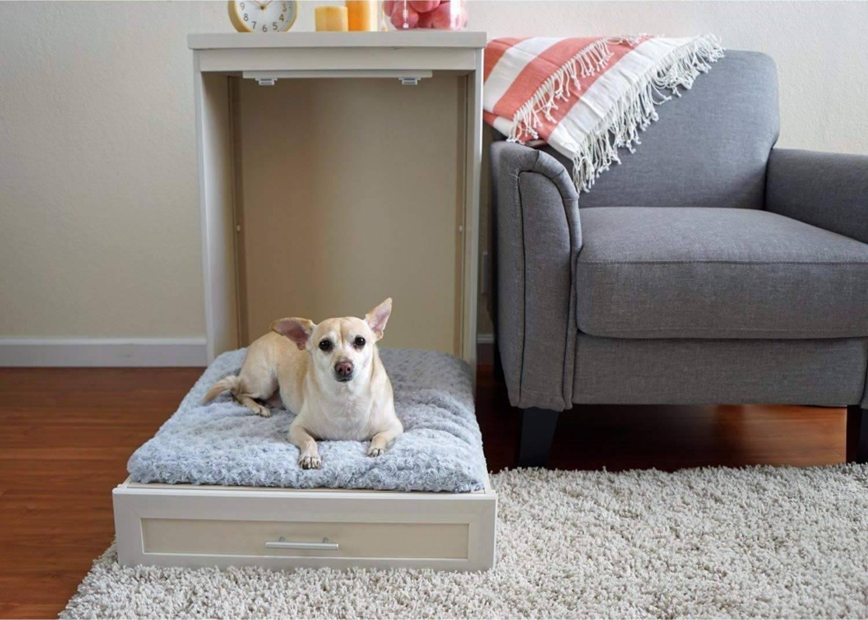 Лучшие породы собак для детей: полный обзор с фото и ценами