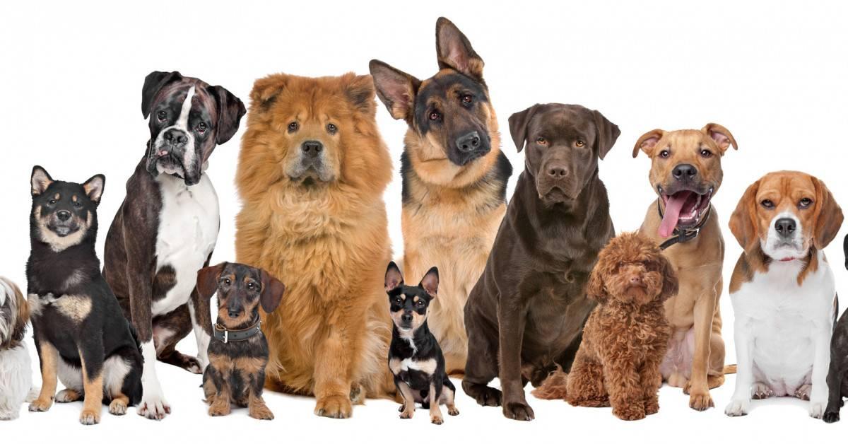 Топ 12 самых маленьких пород собак в мире • всезнаешь.ру