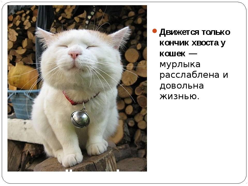 10 признаков того, что ваш кот счастлив | гавкуша | яндекс дзен