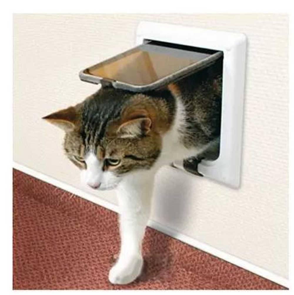 Какие болезни могут передаться хозяину от кошки или собаки - gafki.ru