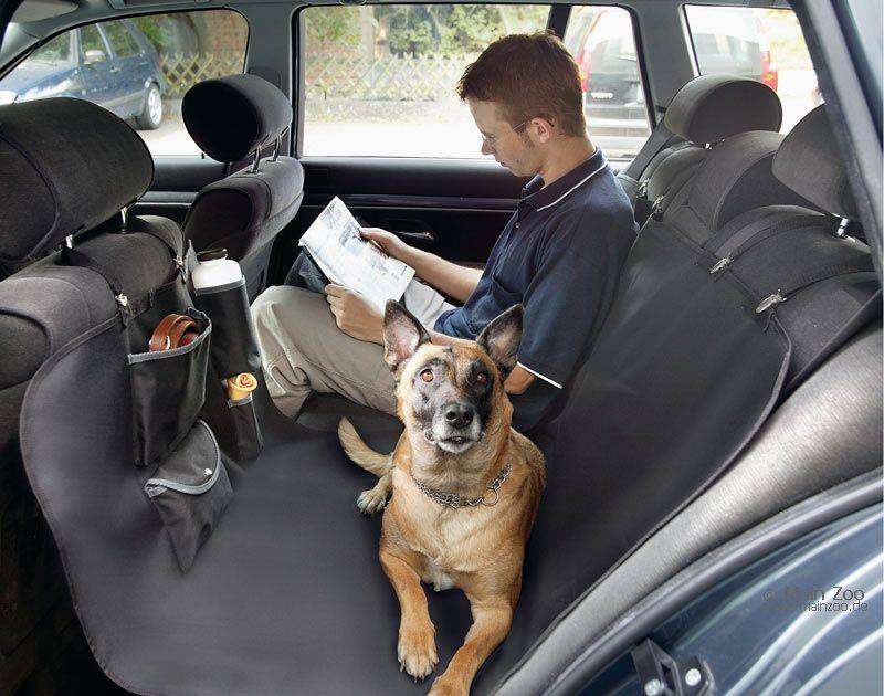 Перевозка животных по россии правила. рассказываем как взять своего питомца в путешествие