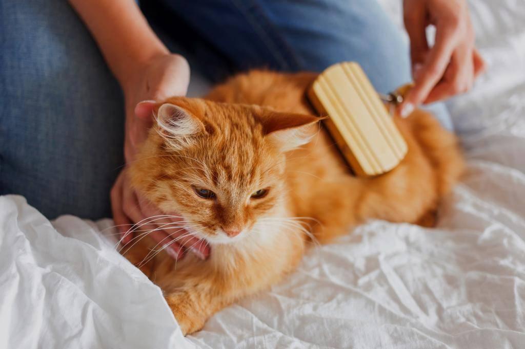 Уход кошки за котенком - муркин дом