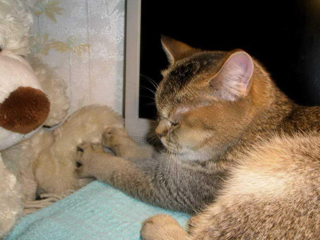 Зачем кошки мнут лапами мягкое и что это значит