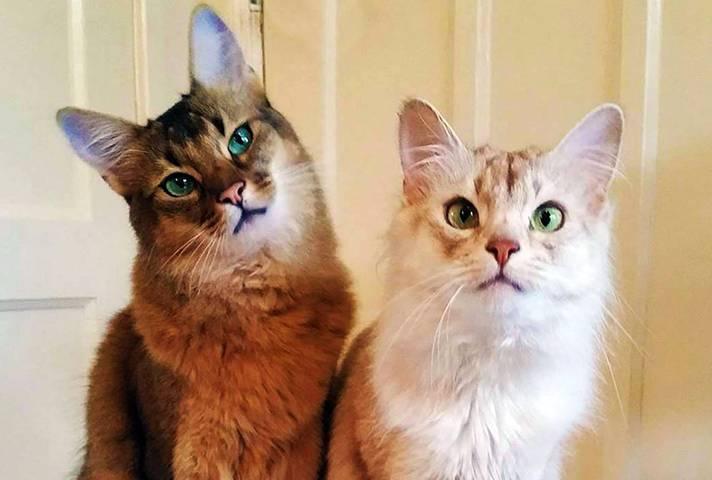Лучшие породы кошек для дома