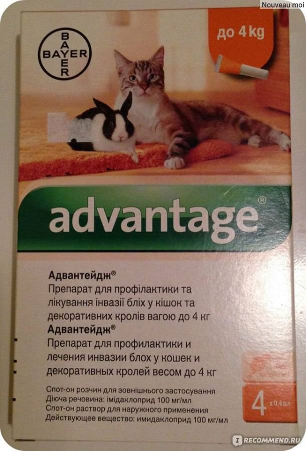 Препарат «адвантейдж» для кошек