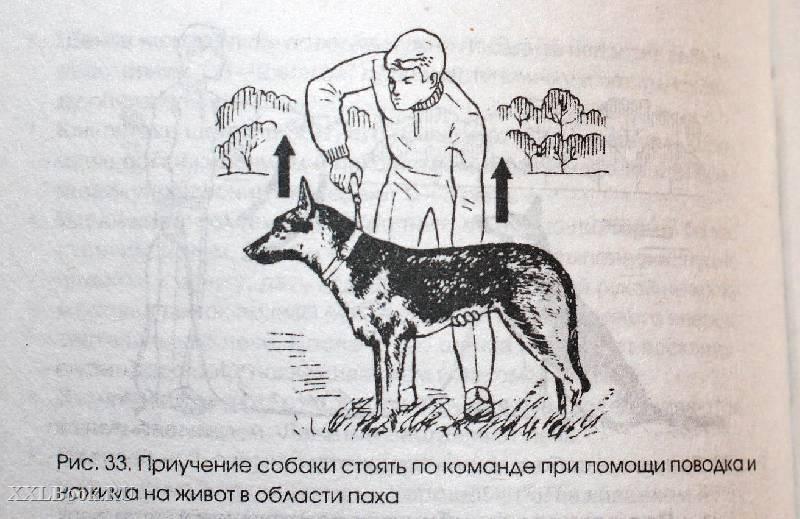 Дрессировка собак в домашних условиях самостоятельно: с чего начать