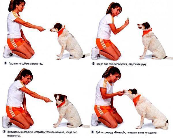Как научить собаку команде ко мне. быстрое обучение и выполнение команды ко мне - dogtricks.ru