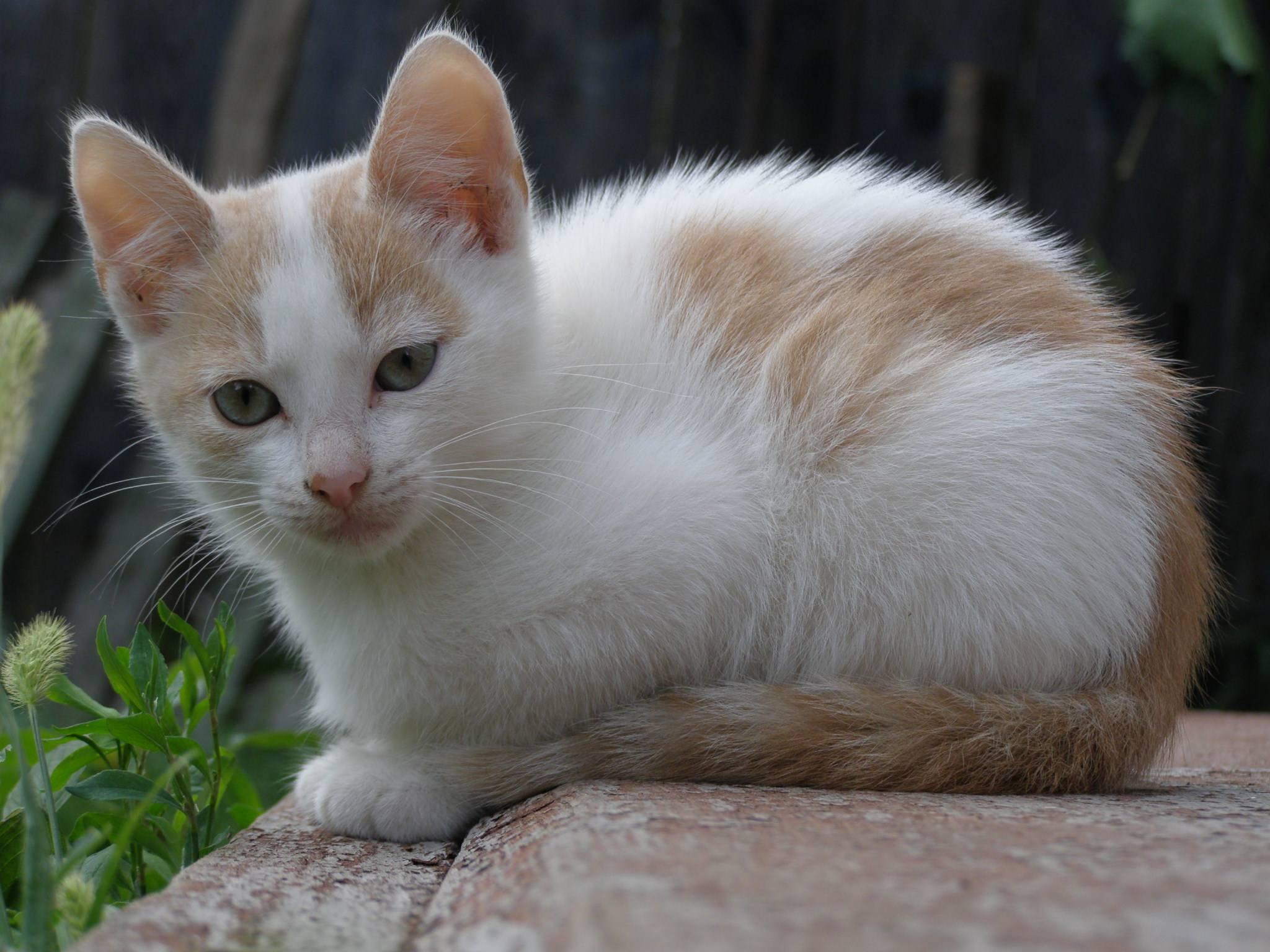 Список лучших имен для кошек и котов : самые популярные, красивые, оригинальные и смешные клички подходящие для черных, рыжих, белых, трехцветных и полосатых котов и кошек | qulady