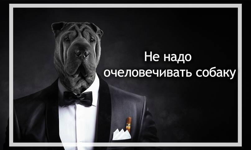 Как воспитывать собаку: спросим профессионалов. хотите вырастить питомца, за которого не стыдно? - автор екатерина данилова - журнал женское мнение