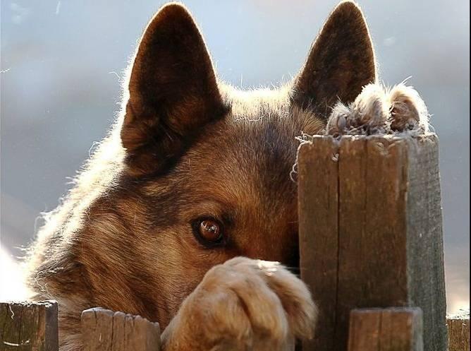 Насколько хорошо собака чувствует хозяина? | компетентно о здоровье на ilive