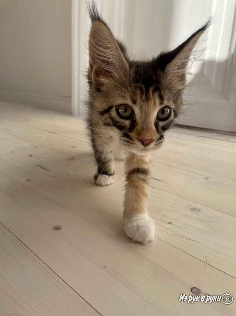 Как определить пол котенка и отличить мальчика от девочки