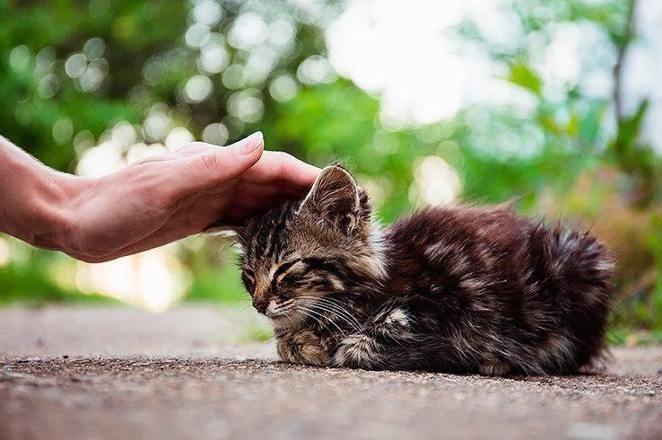 Как можно приручить кота?
