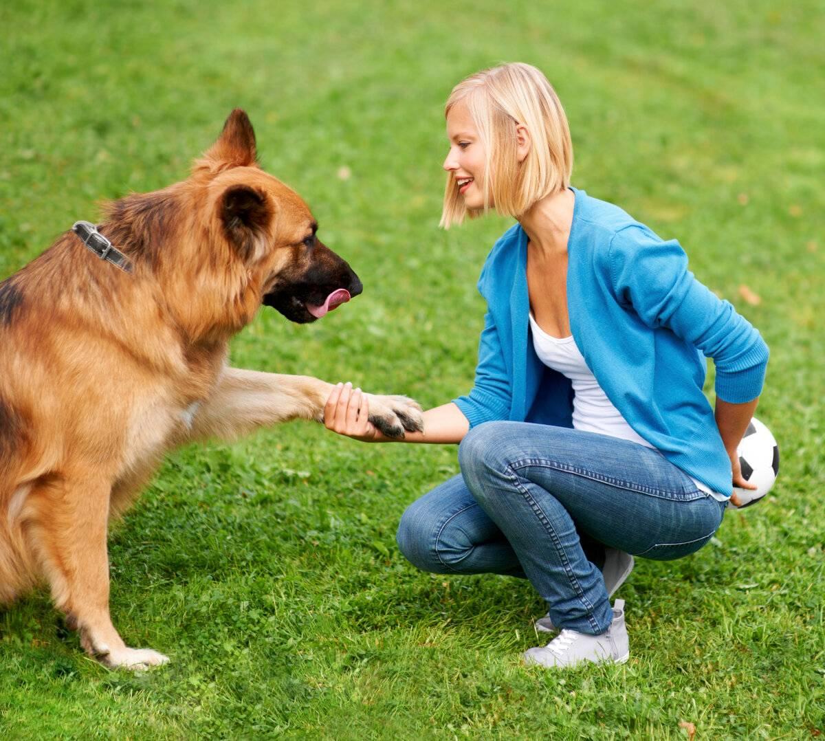 Дрессировка дикой собаки – ключ к счастливому партнёрству длиною в жизнь