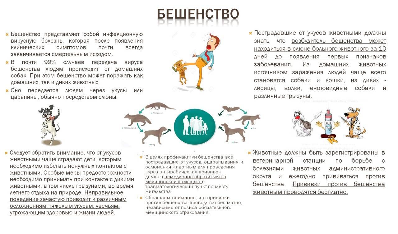Реанимация у кошек и собак