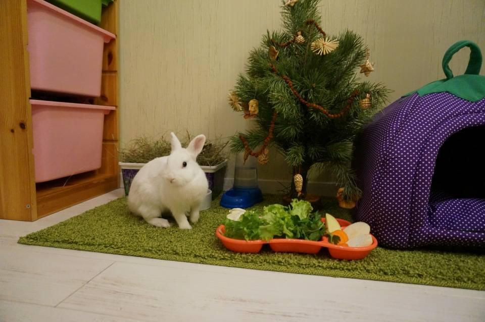 Домик для декоративного кролика: изготовление своими руками