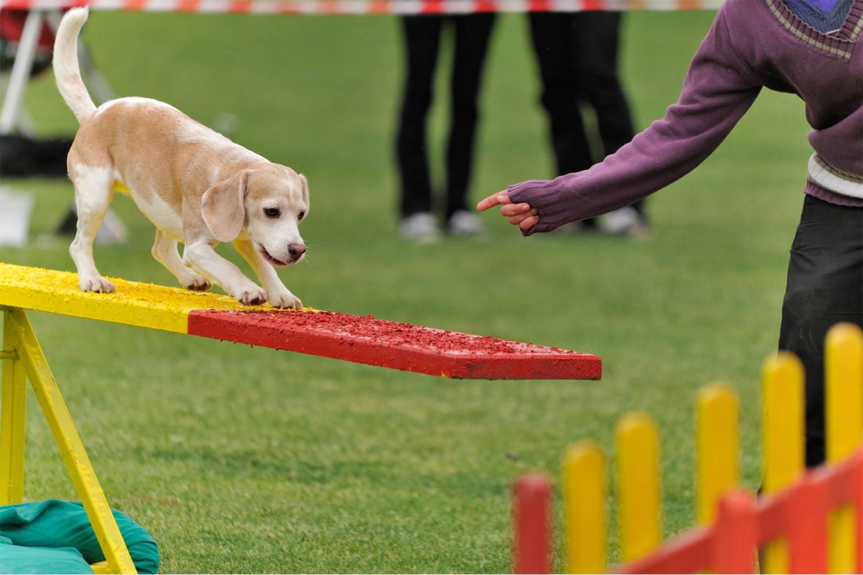 Зкс, или защитно-караульная служба для собак