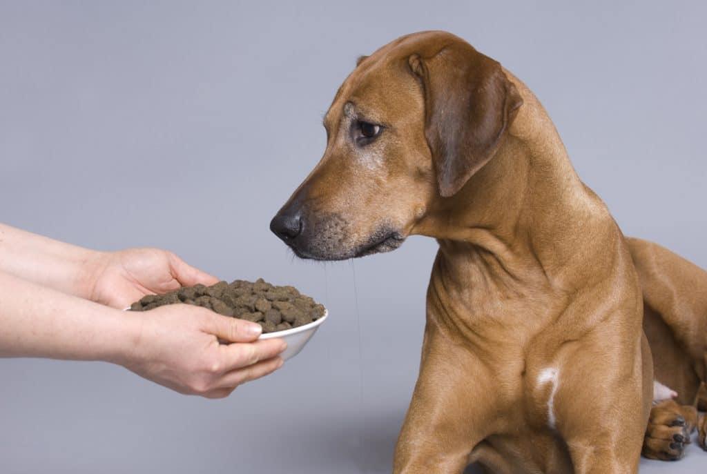 Что делать если щенок не хочет есть сухой корм, почему он не ест?