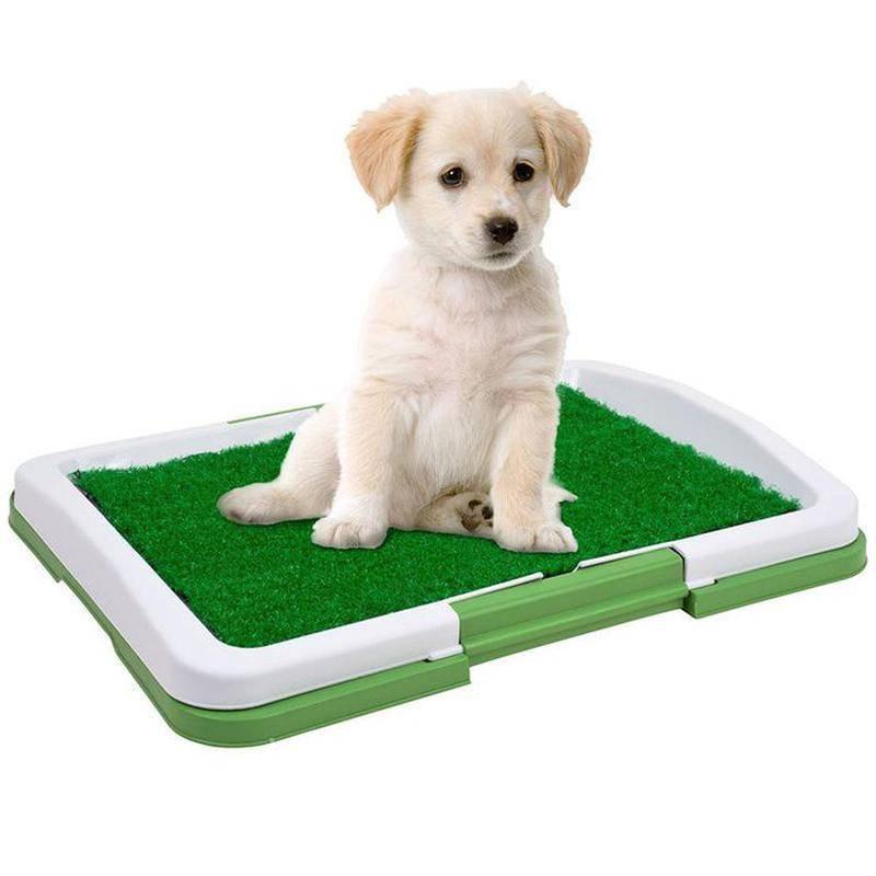 Можно ли и как приучить взрослую собаку к лотку с наполнителем