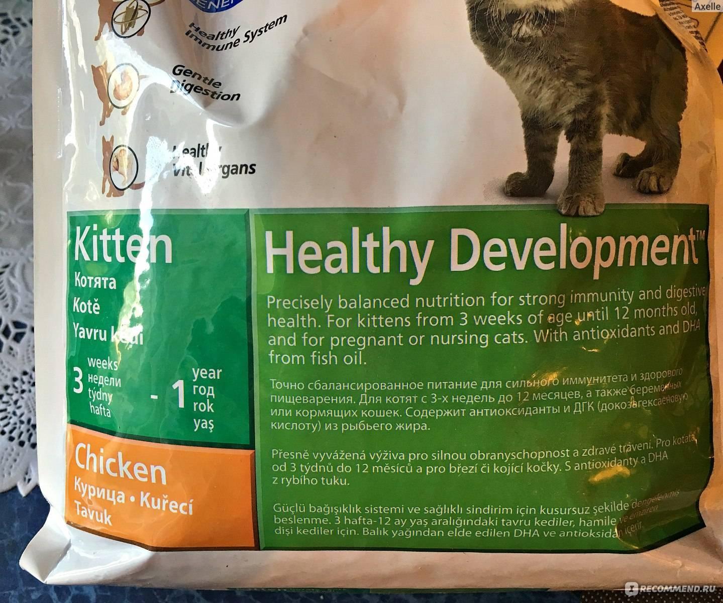 Рейтинг кормов холистик класса для кошек 2021: обзор хороших производителей