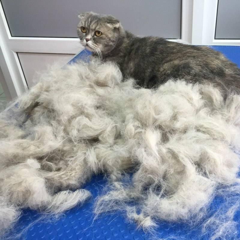 Кот сильно линяет: причины и способы решения проблемы
