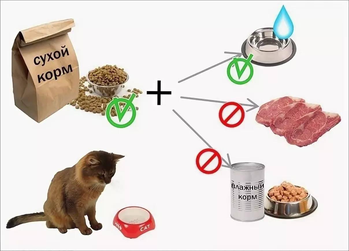 Вреден ли сухой корм для кошек: отзывы ветеринаров.