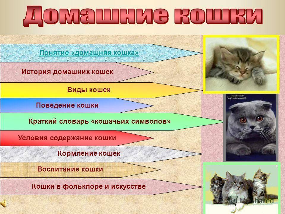 Психология - кот и кошка