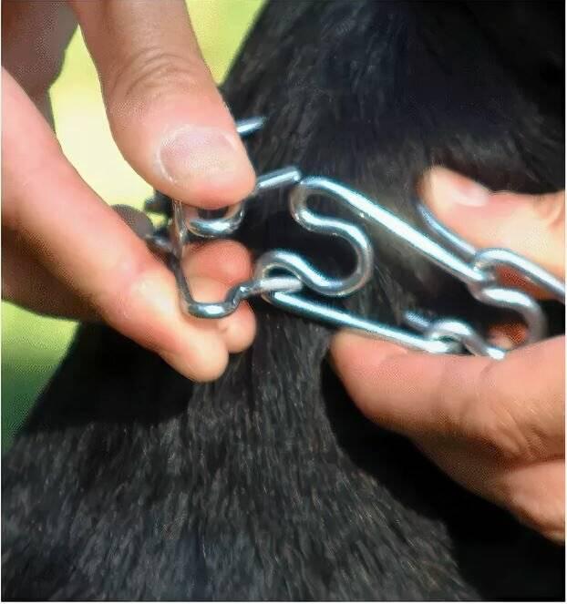 Как правильно использовать строгий ошейник для собак