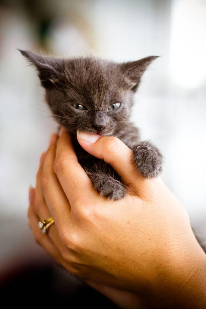 Как отучить котенка кусаться за руки ноги   и царапаться