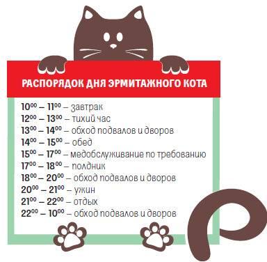 Как часто котенок ходит в туалет — все о покакушках