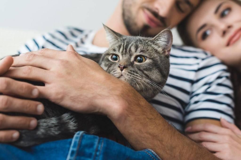 Правила, которые кошка должна усвоить с детства - gafki.ru
