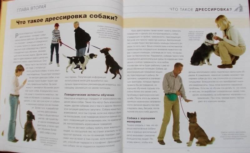 Необычная и редкая порода собак – чунцин или китайский бульдог