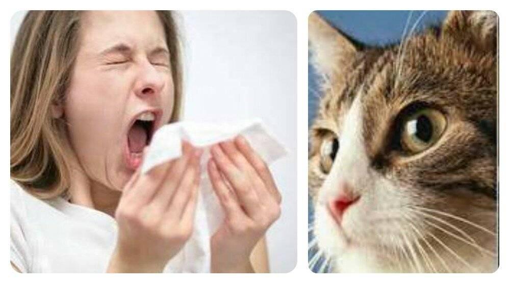 Аллергия на шерсть: нужно ли выгонять кошку?