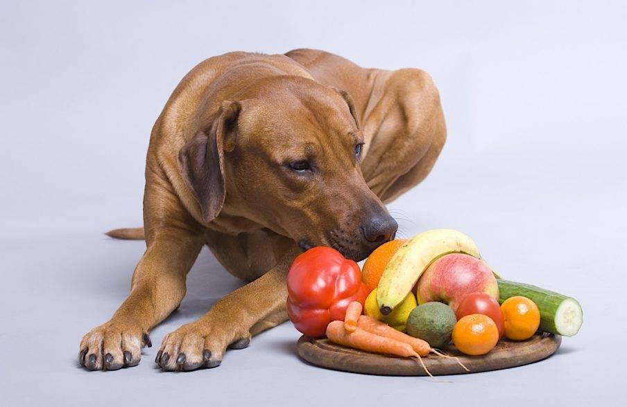 Почему собакам нельзя давать куриные кости