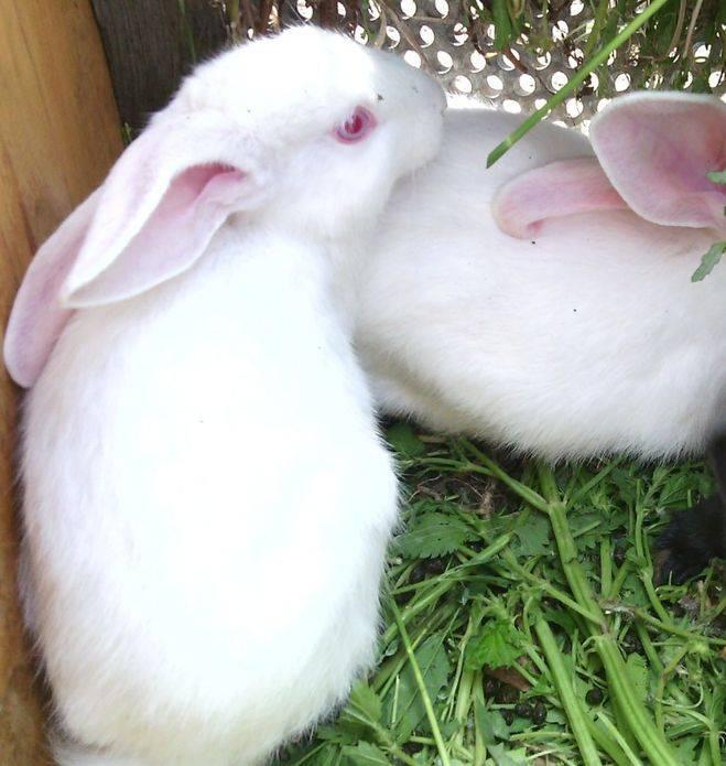 ᐉ как назвать кролика: имена и клички для девочек и мальчиков - zooon.ru