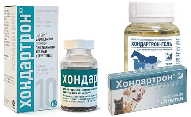 Хондартрон для собак: инструкция по применению, схема лечения, отзывы специалистов