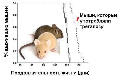 О живут мыши;продолжительность жизни мышей