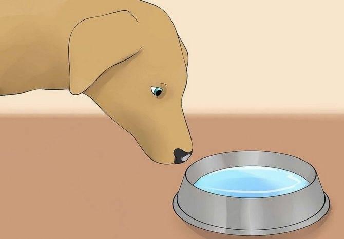 Почему собака или щенок икает часто: что делать, профилактика