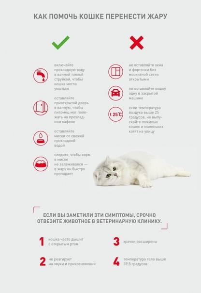 Как померить температуру кошке, как понять и определить без градусника, признаки и симптомы