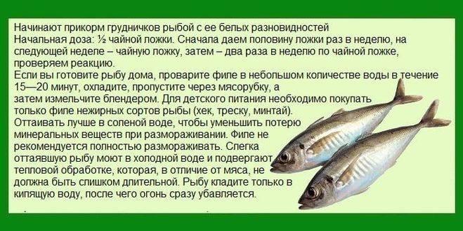Рыбный день для собаки