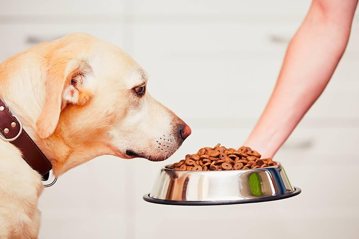 Собака отказывается от сухого корма: основные причины, ошибки в кормлении и содержании, как правильно выбрать сухой корм для собаки