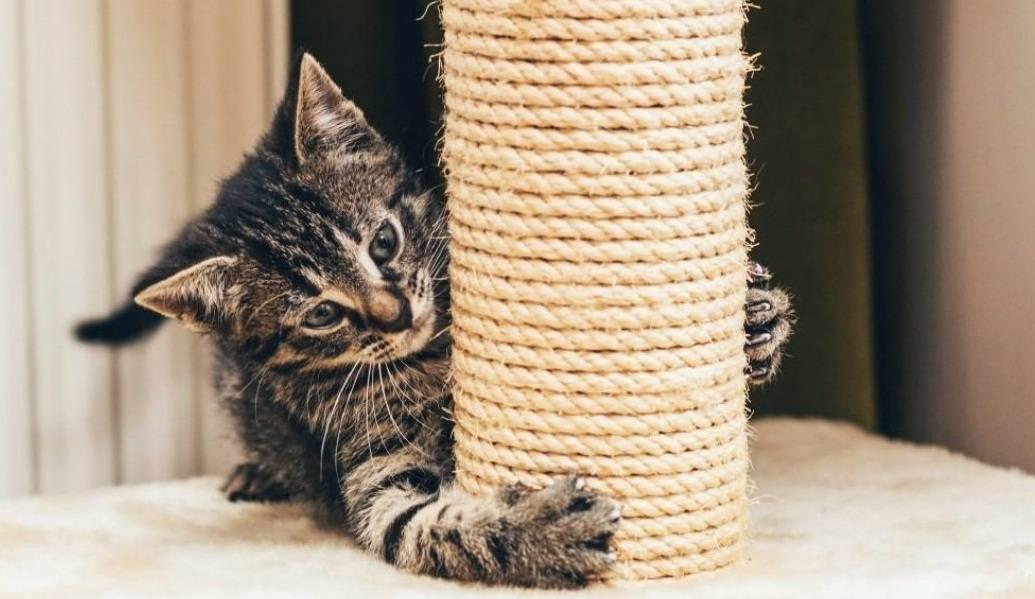 Какую когтеточку выбрать для кошки. какая когтеточка лучше, цены