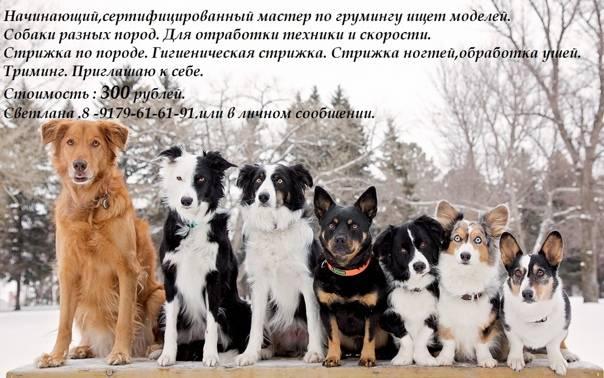 Список опасных пород собак в россии 2019 — о чем говорит федеральный закон с новыми поправками