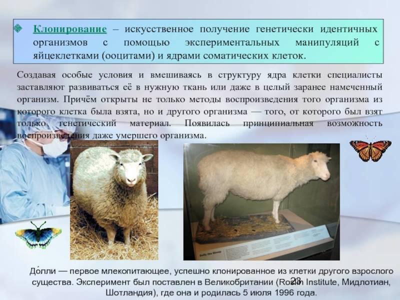 Клонирование животных и растений — википедия