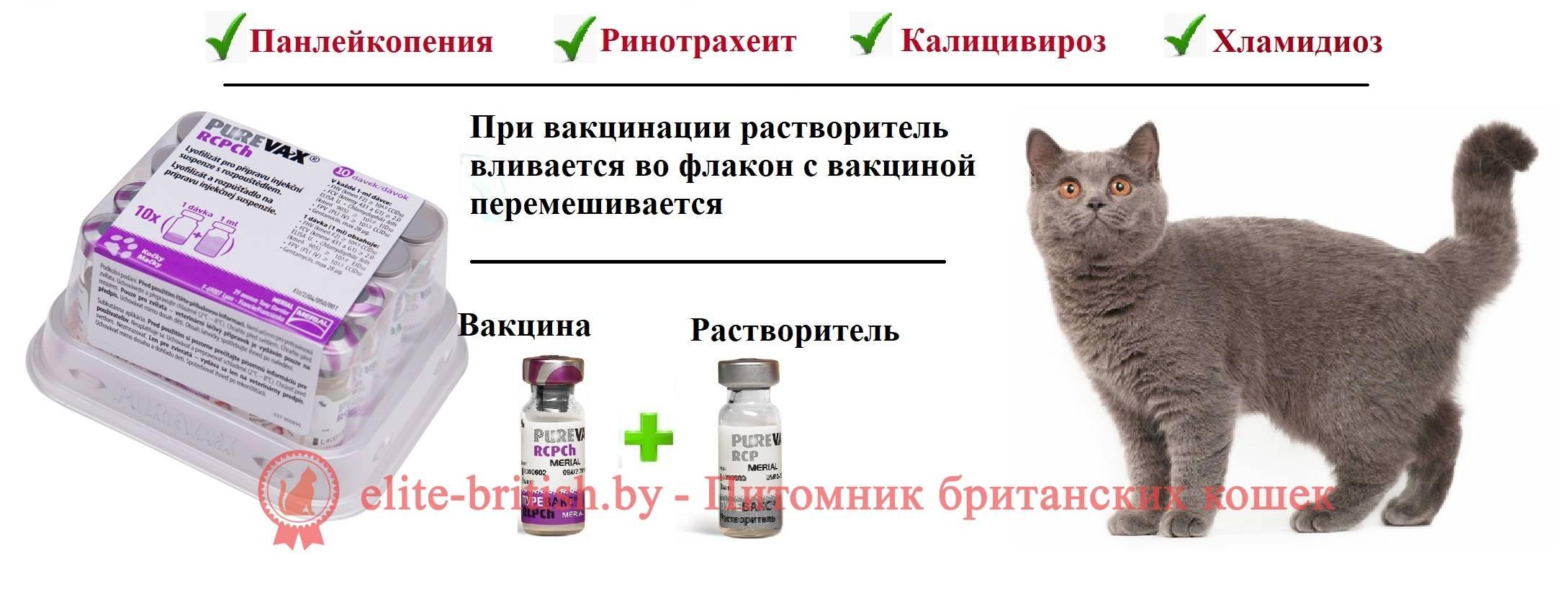 Как применяют вакцины