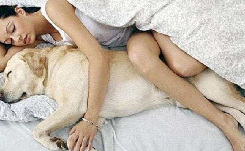 Можно спать домашними животными или нет